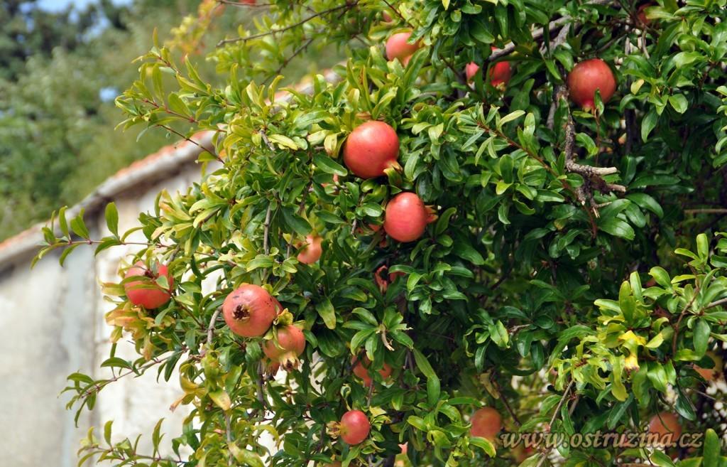Igrane granátová jablíčka