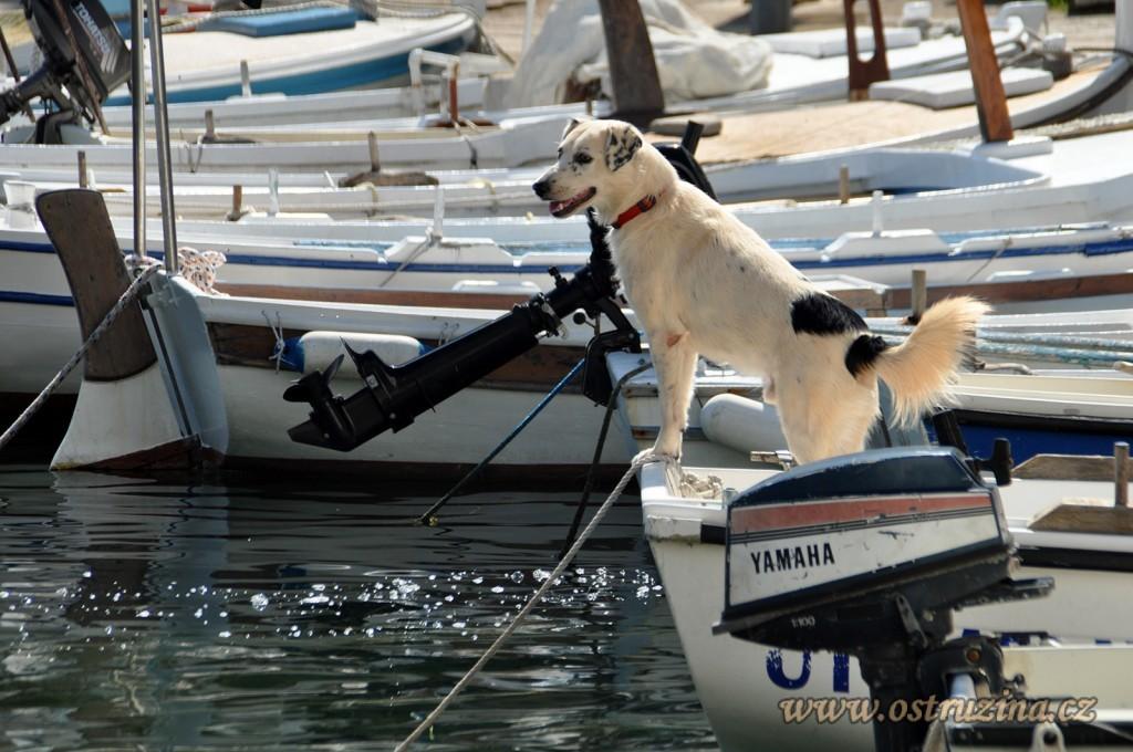 Igrane přístav se psem
