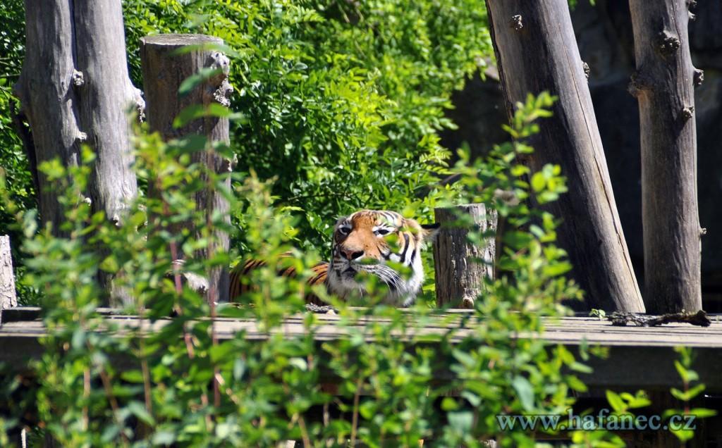 zoo11